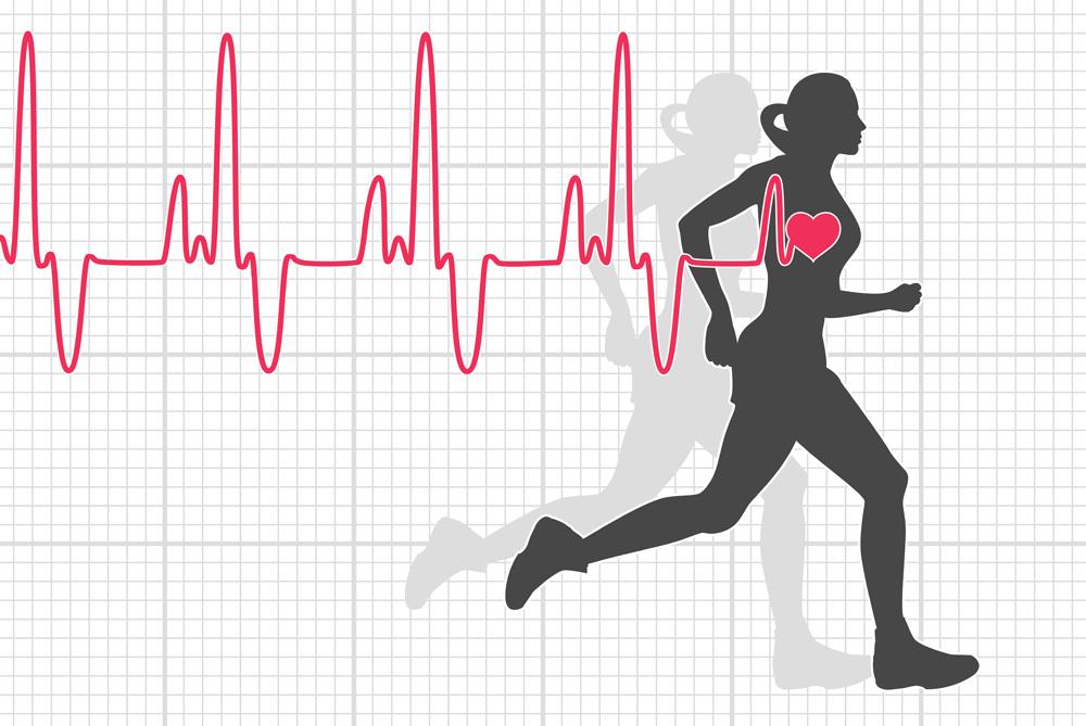 träning puls